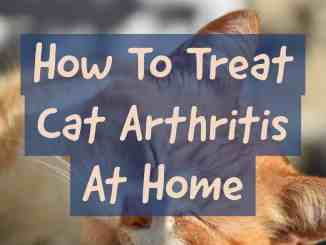How To Treat Cat Arthritis At Home