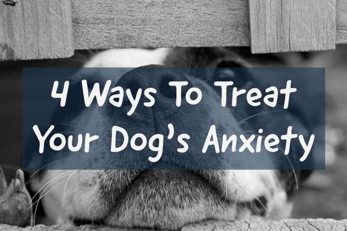 4 Ways To Treat Your Dog's Anxiety