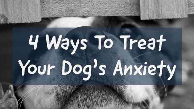 How To Treat Your Dogs Anxiety