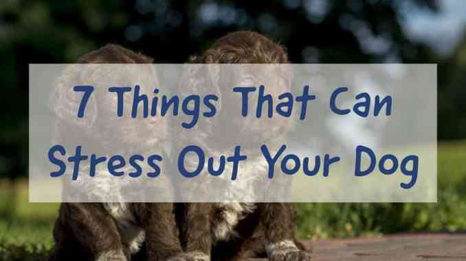 Things That Can Stress Out Your Dog