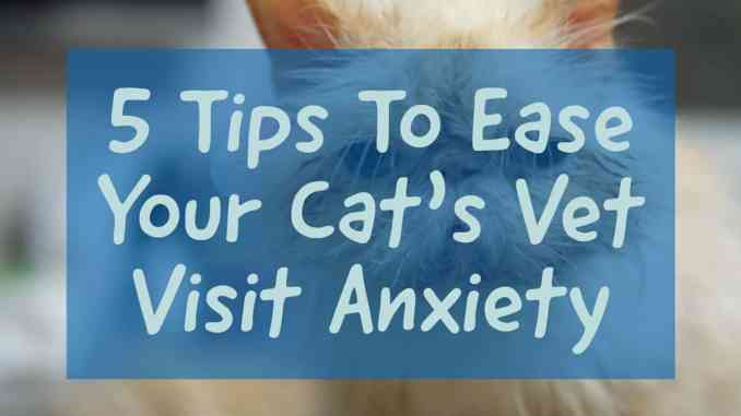 Tips To Ease Your Cats Vet Visit Anxiety