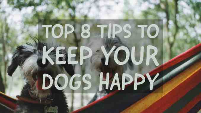 8 Tips to Keep Your Dogs Happy