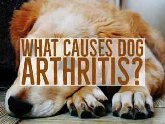 Dog Arthritis Causes