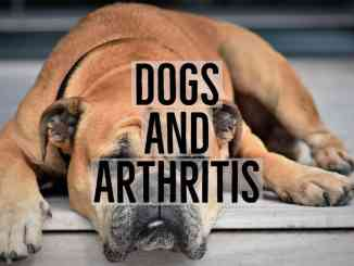 Dogs and Arthritis