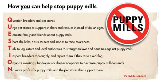 PuppyMill1