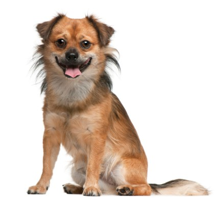 SINGLE DOG.jpg