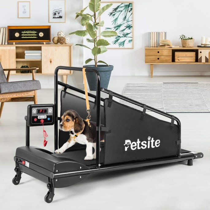 The Treadmill for Dogs