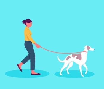 2.Leash Training How To Walk Effectively