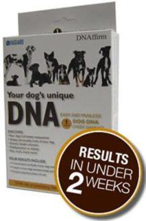 dog breed dna test kits 2017 reviews comparison ratings. Black Bedroom Furniture Sets. Home Design Ideas
