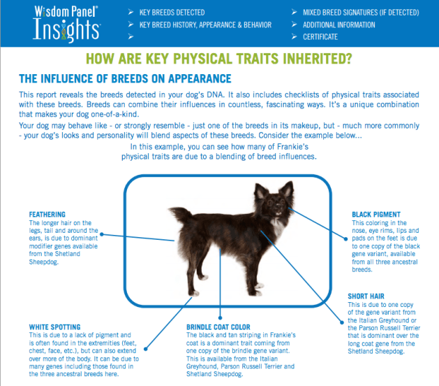 dog breed identifier report