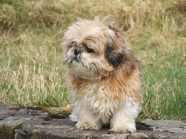 7 Worst Breeds For Families With Small Children
