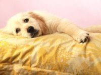 老犬のためのベッド選び