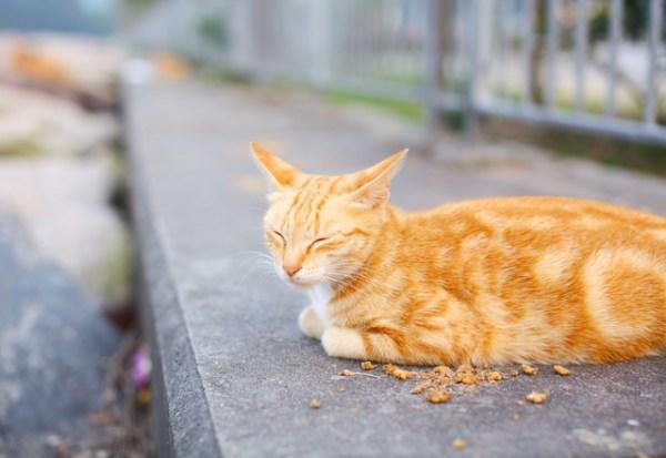 Street cat eating food