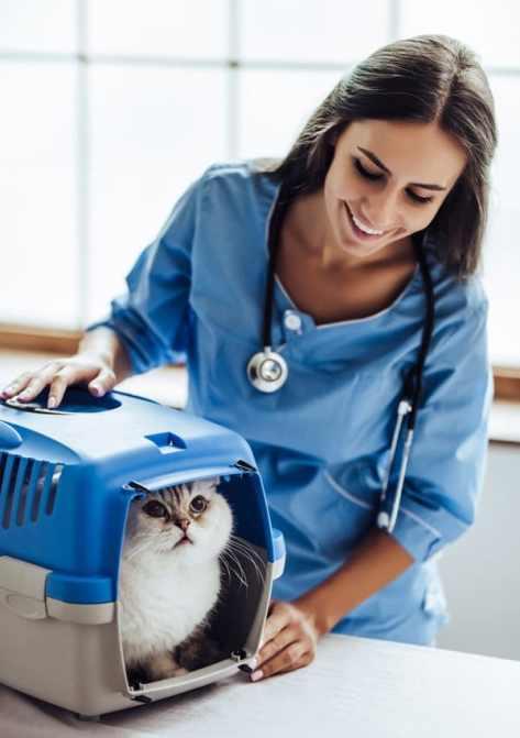 Кошка на приеме у ветеринарного врача