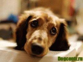 стерилизация собак последствия