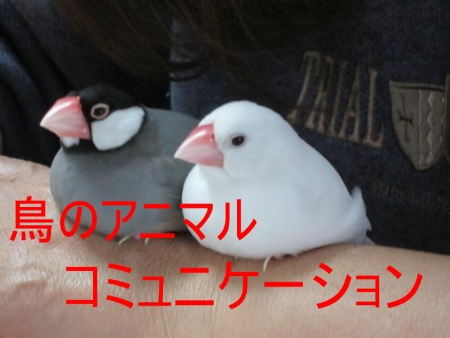 鳥のアニマルコミュニケーション