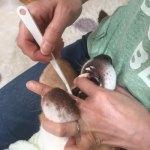 ゴールデンウィークに愛犬の歯磨きに挑戦!