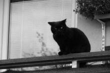 black-cat-2052144_1920