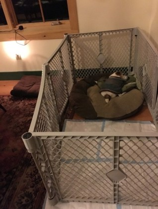 A brown and white terrier sleeps in his bed inside an exercise pen that prevents wandering
