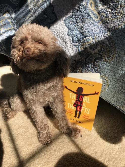 benji and book