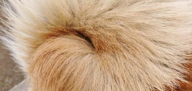 犬の抜け毛