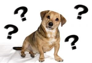 Dog Food Recall Information and Alerts 2020 first half 1