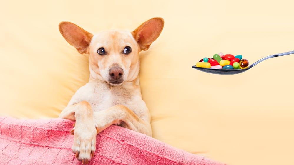 prescription dog food