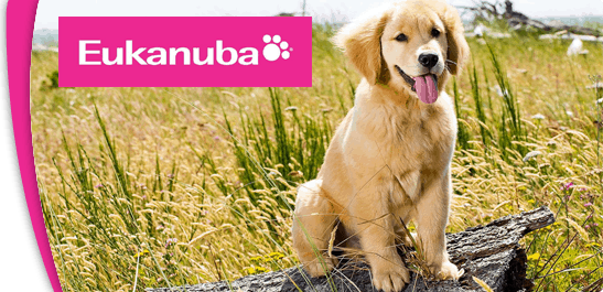 Eukanuba Dog Food: 2020 Review, Recalls & Coupons 16