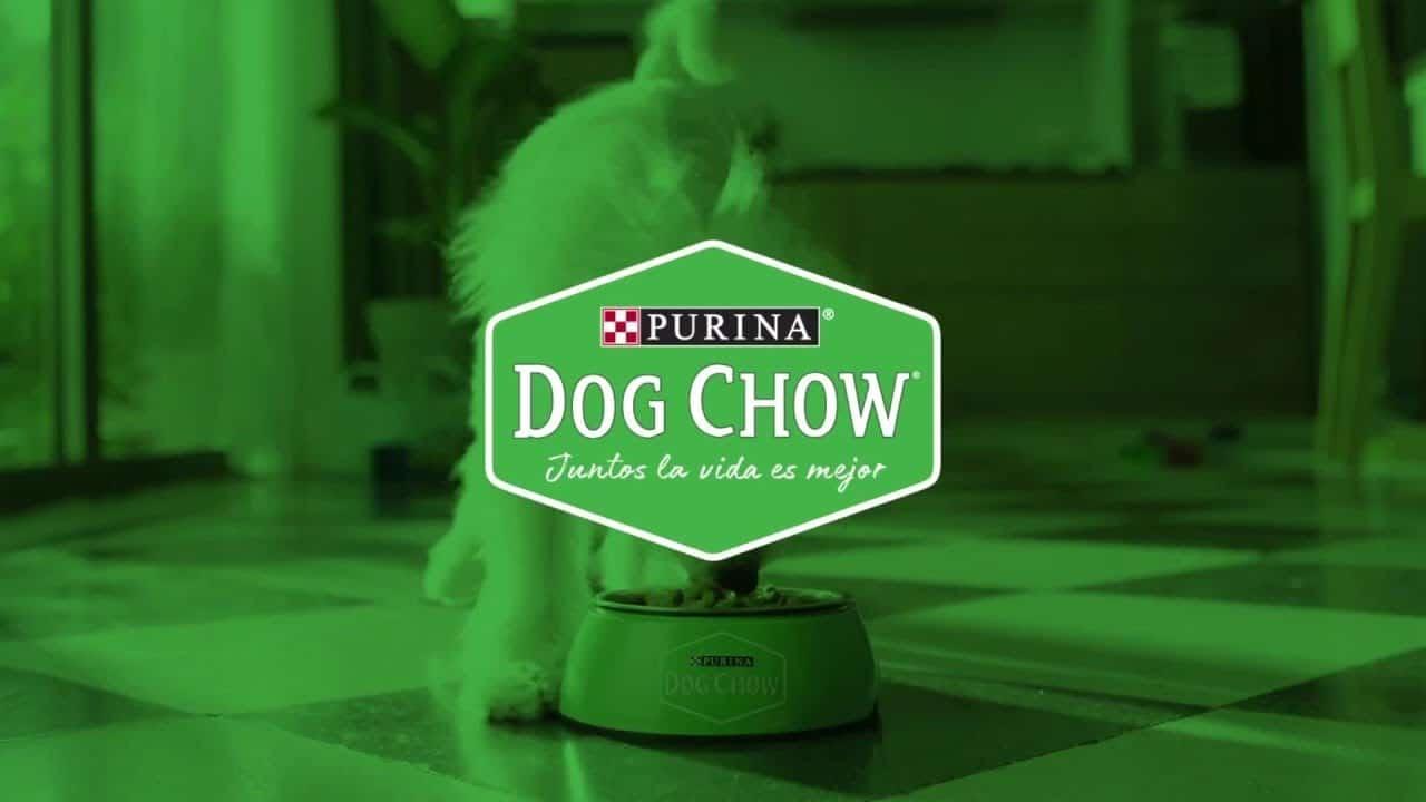 Purina Dog Chow Dog Food: 2020 Review, Recalls & Coupons 20