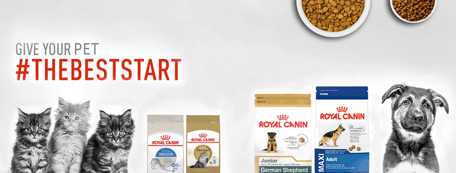 2020 Royal Canin Dog Food Review: Tailored Nutrition For Your Pup 13