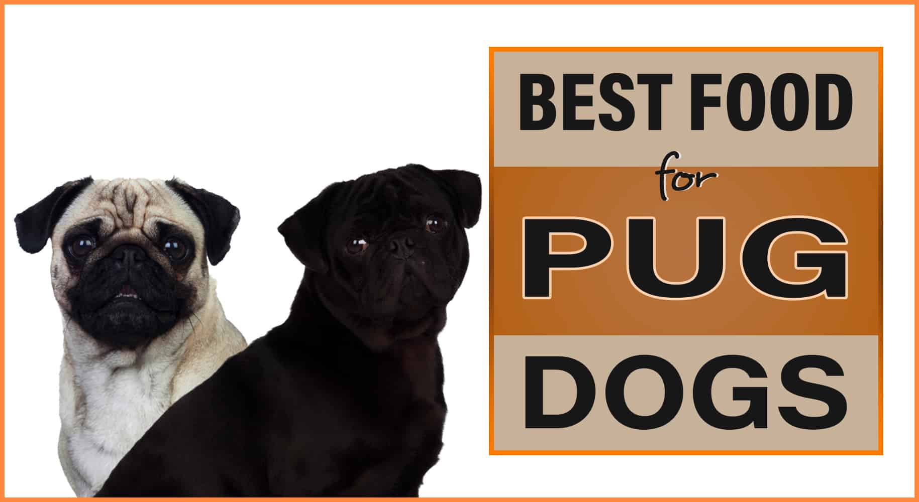 Best Food For Pug Dogs