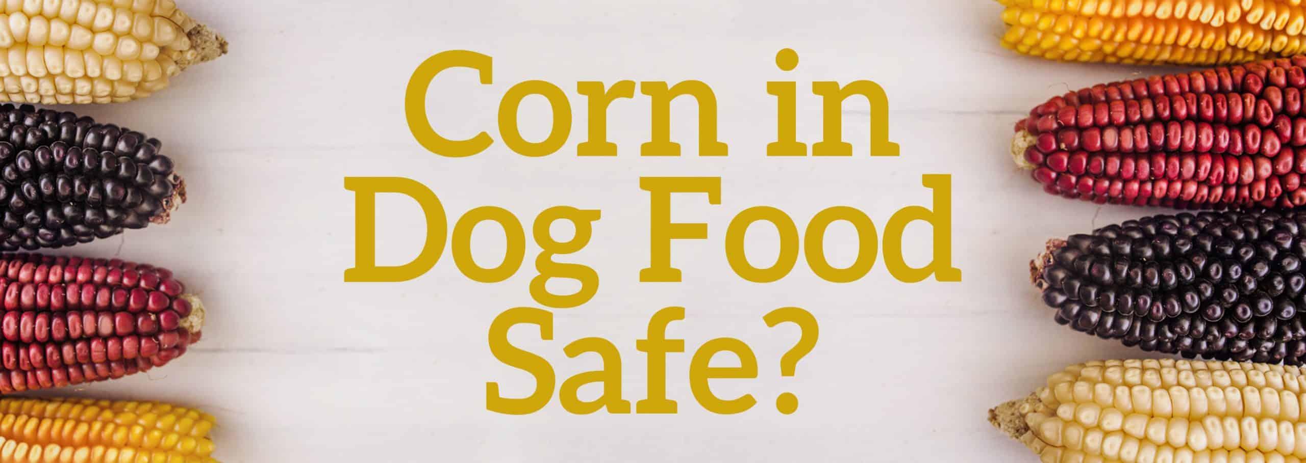 Corn in Dog Food Safe