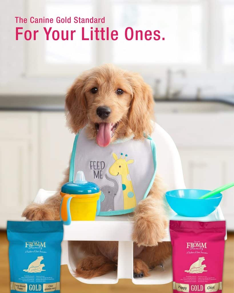 Fromm Dog Food Review [year]: Recalls, History and More! 12