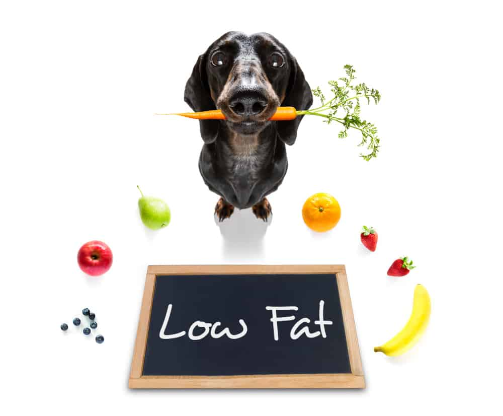 Does Your Dog Need A Low Fat Dog Food? 1