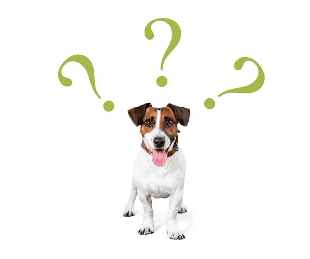 The Sticky Question of Gluten-Free Dog Food 2