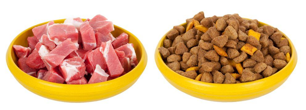 Which Diet is Best for Your Dog? 11