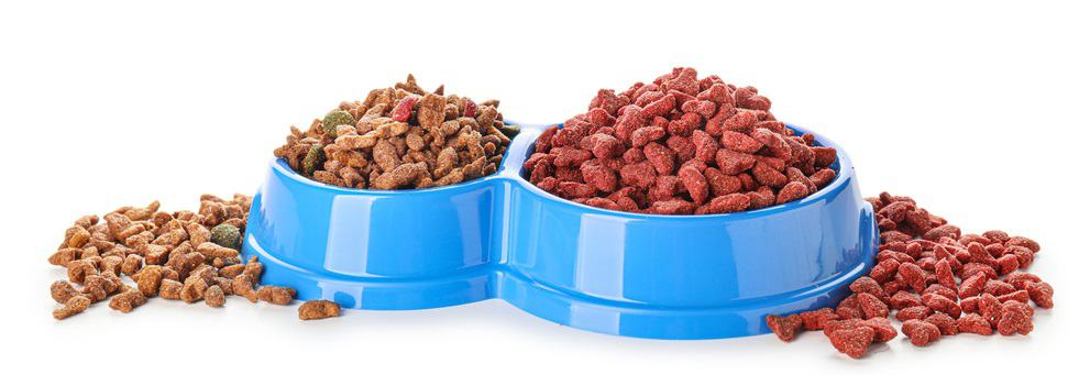The State of Pet Food Today 2021 2