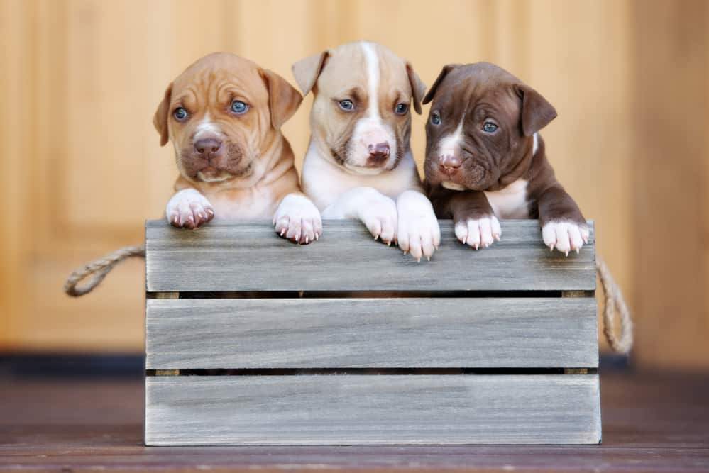 Best Large Breed Puppy Food: Top 5 Brands for Fast Growing Pups 17
