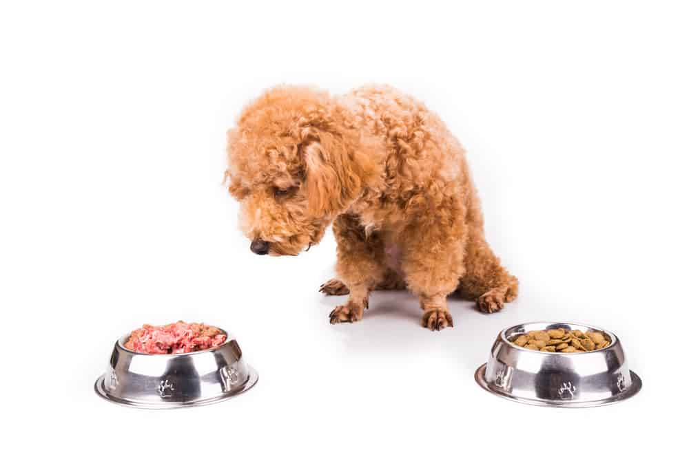 Are Dogs Carnivores or Omnivores? 2