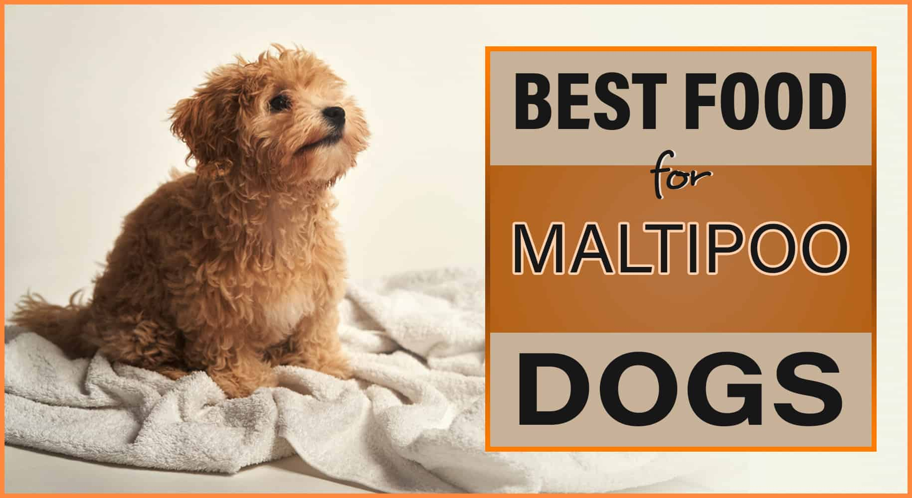 Best Dog Food for Maltipoos