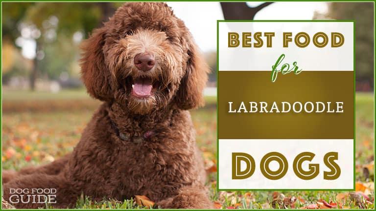 Best Dog Food for Labradoodles