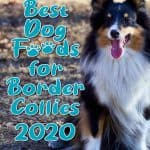 10 Best (Healthiest) Dog Food For Border Collies in 2020