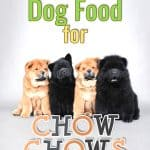 10 Best & Healthiest Dog Foods For Chow Chows in [year]