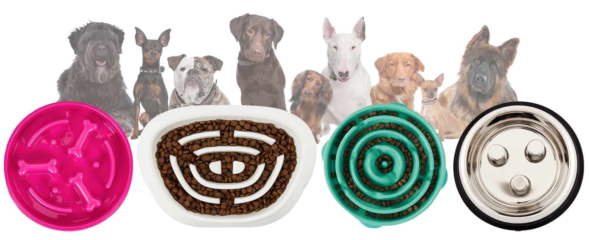 Slow Eating Dog Bowls