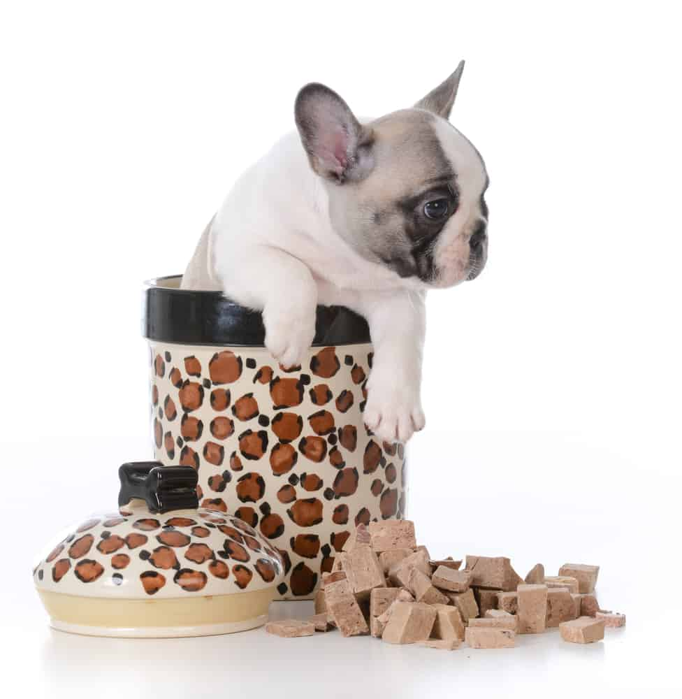 Here are some Benefits of Using a Storage Container for Dog Food 2