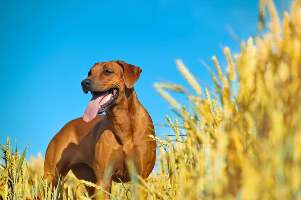6 Best (Cheapest) Grain Free Dog Foods in 2020 20