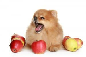 Can Dogs Eat Applesauce? Is it for the Best or Worst? 2