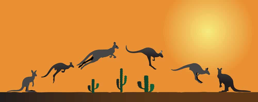kangaroo dog food