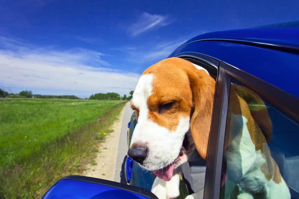 Tuscan Natural Dog Food: [year] Reviews, Recalls & Coupons 12