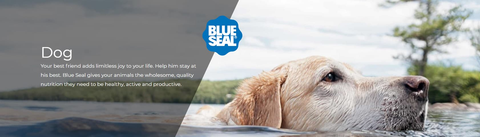 Blue Seal Dog Food: 2020 Review, Recalls & Coupons 1